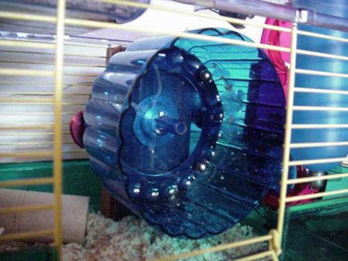 Hamster Power