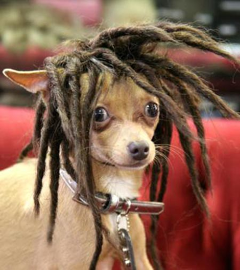 Animal Wig