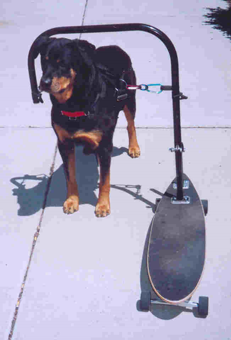 dog powered skateboard