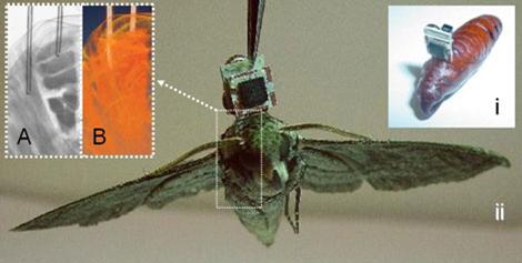 DARPA Moths