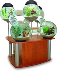 orb aquarium