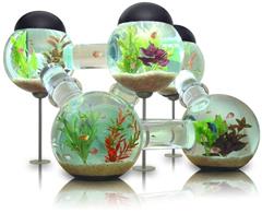 silverfish aquarium