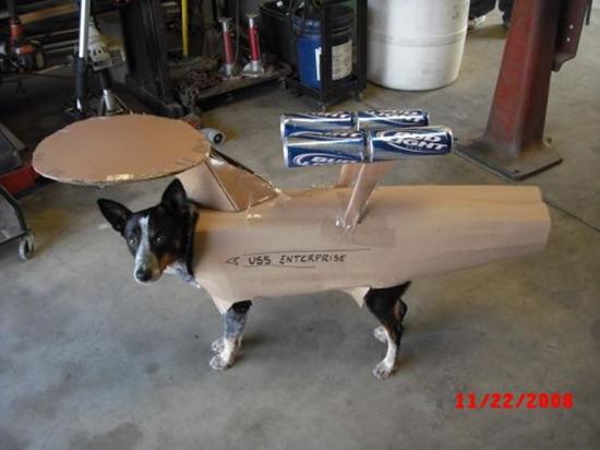 USS Enterprise Dog Costume