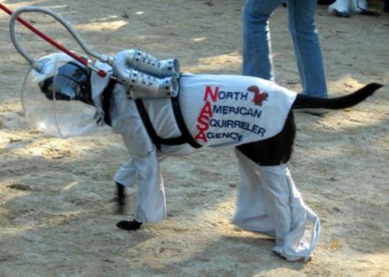NASA Dog Costume
