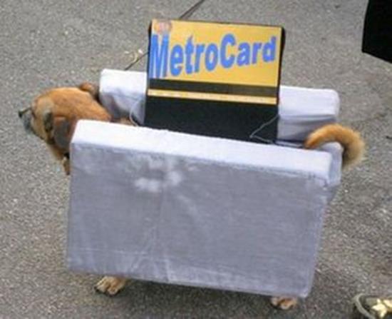 Metro Card Dog Costume