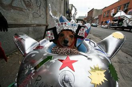 Spaceship Dog Costume