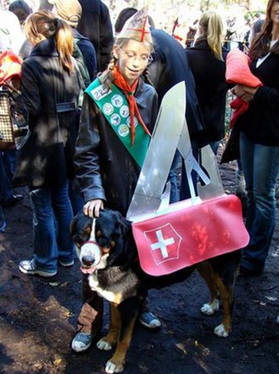 Swiss Army Dog Costume