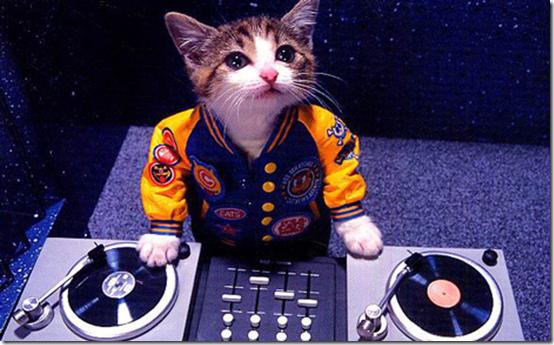 DJ Hero Cat
