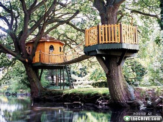 Tree House with bridge
