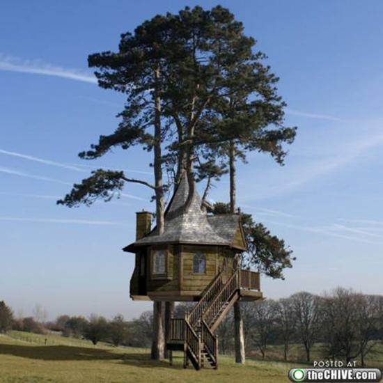 Enchanting Tree House