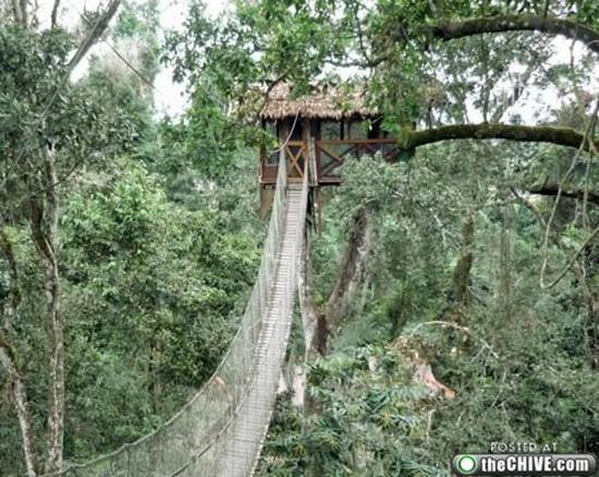 Tree House With Foot Bridge