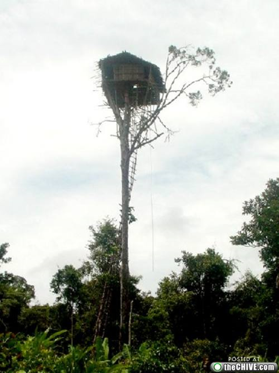 Ten Amazing Tree Houses Gadgetking Com