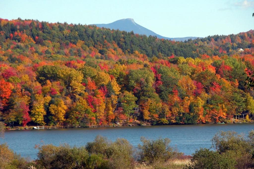New Hampshire Tree's