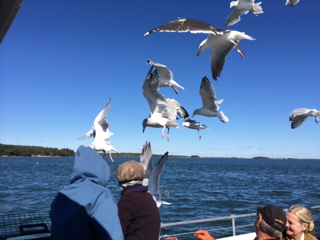 Lobster Boat Seagulls