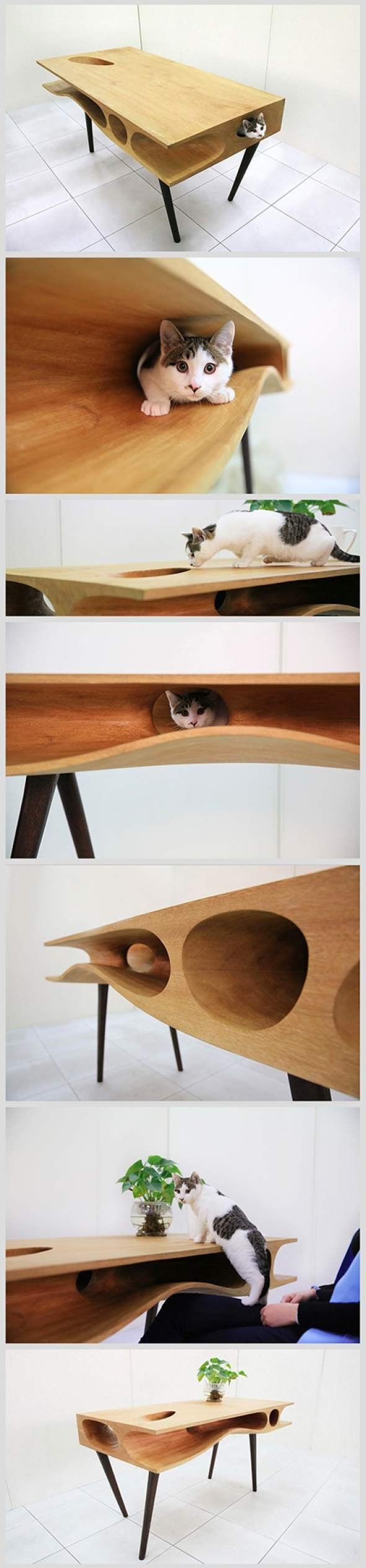 CATable_Cat_Table