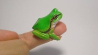 animal-rings-frog