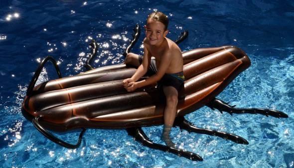 Cockroach Pool Float 8