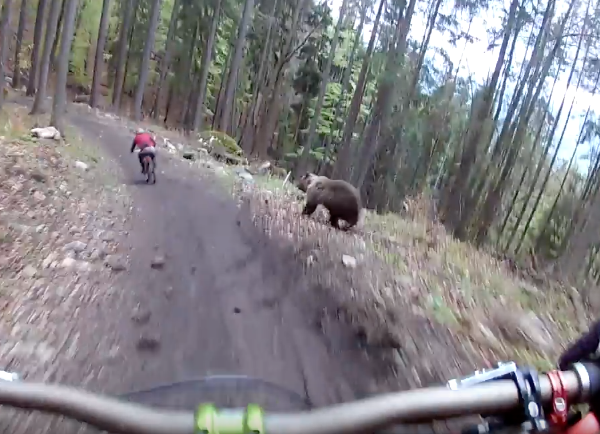 Bear Chasing Mountain Biker Slovakia
