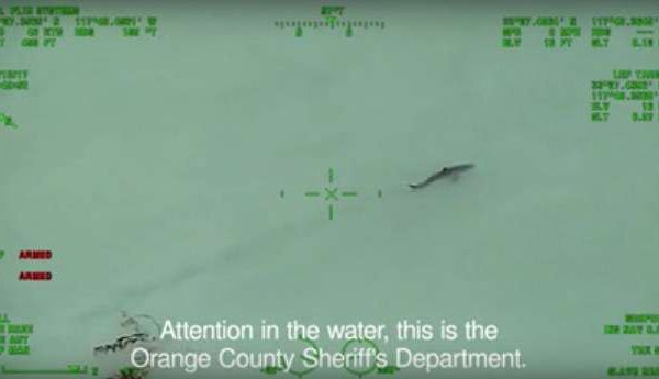 police-warning-paddleboarders-sharks