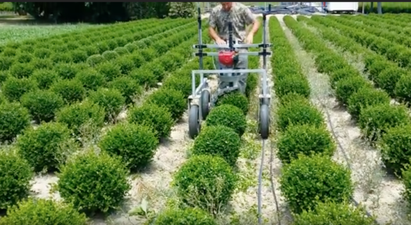 RAP 10 Spherical Shrub Trimmer