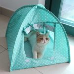 Green Cat Camp Tent 2