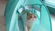 Green Cat Camp Tent 2