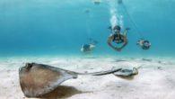 Blu3 Nemo Dive System Diving