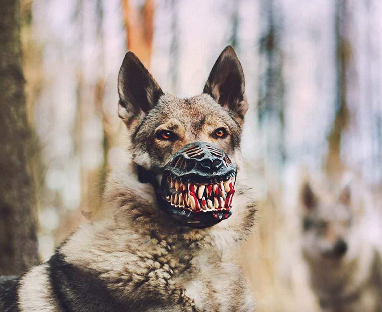 Scary Dog Muzzle