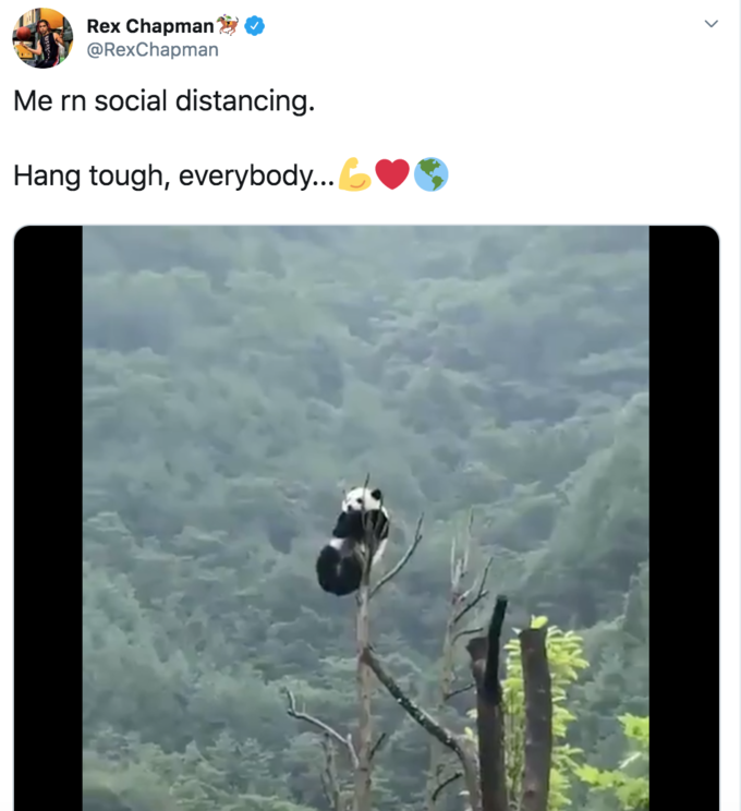 Social Distancing Panda