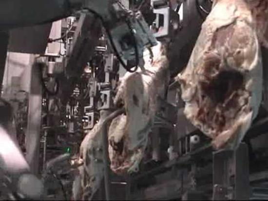 Ham De-Boning Robot