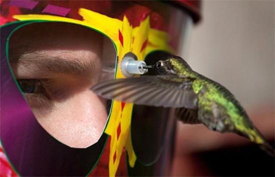 eYe2eYe Hummingbird Feeder Mask